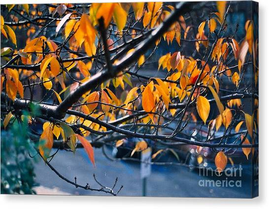 Tree In View Canvas Print by Simonne Mina