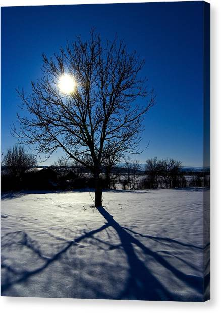 Tree Into Sun On A Winter Snowy Afternoon Canvas Print