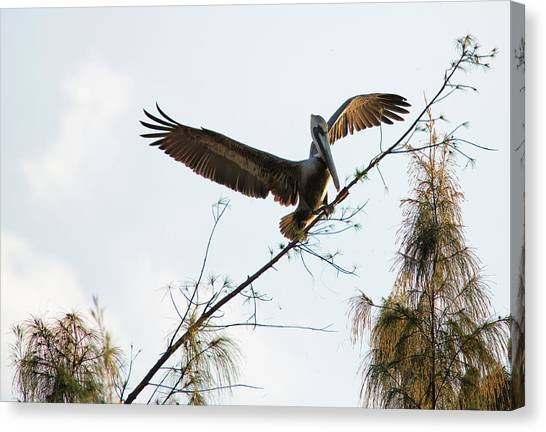 Canvas Print featuring the photograph Tree Landing by David Buhler
