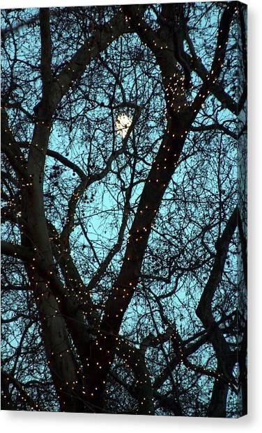 Tree Light Canvas Print by Jez C Self