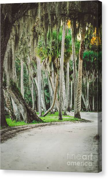 Fort Pierce Canvas Print - Tree Lined Dirt Road In Vintage by Liesl Marelli
