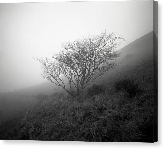 Tree Mist Canvas Print by Benjamin Garvey