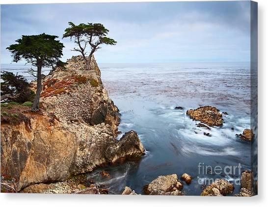 Cliffs Canvas Print - Tree Of Dreams - Lone Cypress Tree At Pebble Beach In Monterey California by Jamie Pham