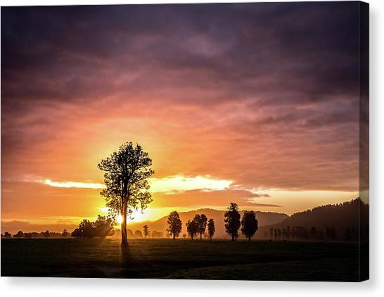 Fox Glacier Canvas Print - Tree Of Light by Mark Slater