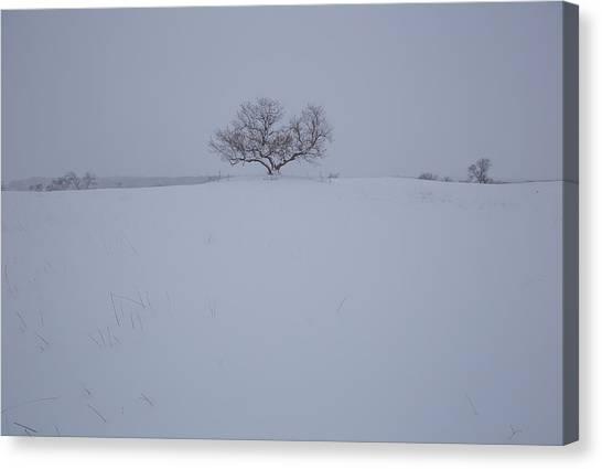 Sec Canvas Print - Tree Of Snow by Aaron J Groen