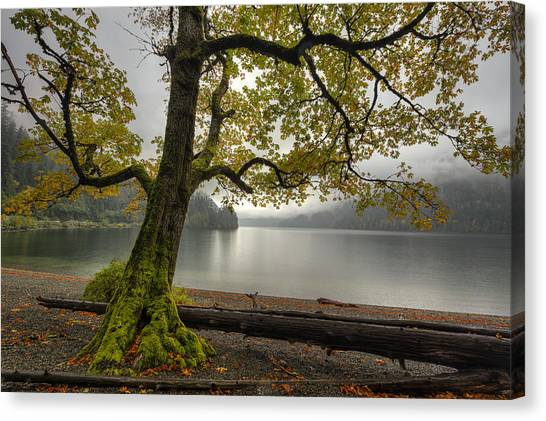 Vancouver Island Canvas Print - Tree On Cameron Lake by Mark Kiver
