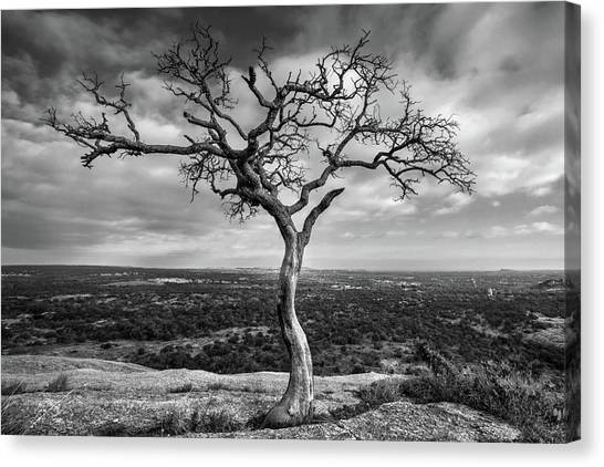 Tree On Enchanted Rock In Black And White Canvas Print