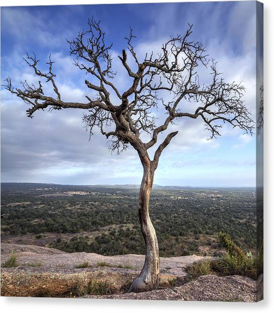 Tree On Enchanted Rock - Square Canvas Print