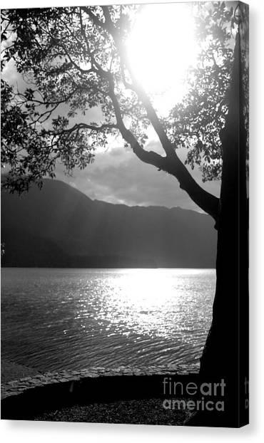 Tree On Lake Canvas Print