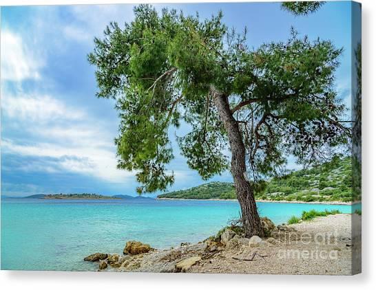 Tree On Northern Dalmatian Coast Beach, Croatia Canvas Print