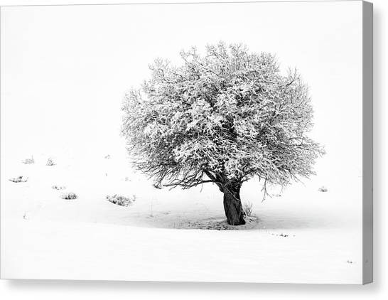 Tree On Snowy Slope Canvas Print