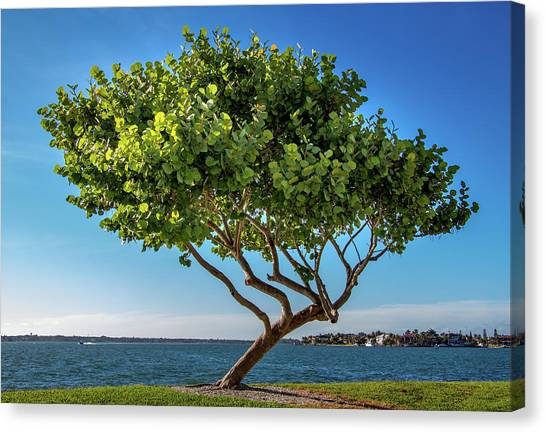 Tree On The Bay Canvas Print