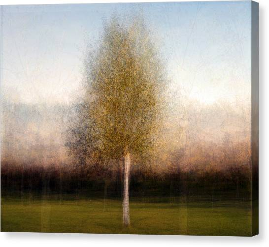 Tree One Canvas Print by Denis Bouchard