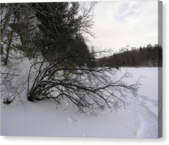 Tree Over Frozen Lake Canvas Print by Richard Mitchell