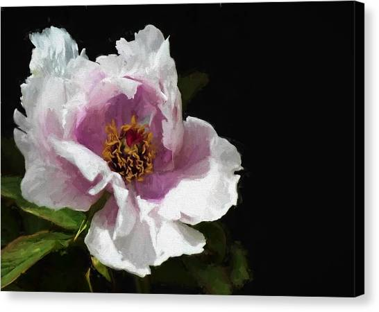 Tree Paeony II Canvas Print