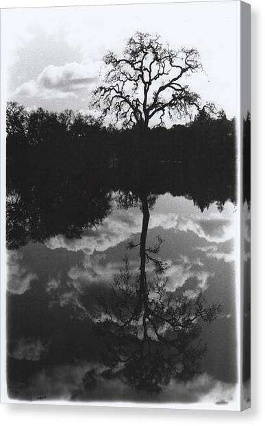 Tree Reflection Sebastopol Ca, Canvas Print