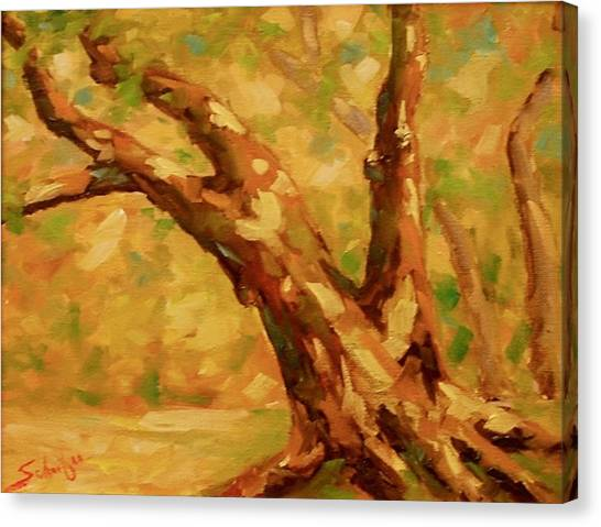 Canvas Print - Tree Shadows by Charles Schaefer