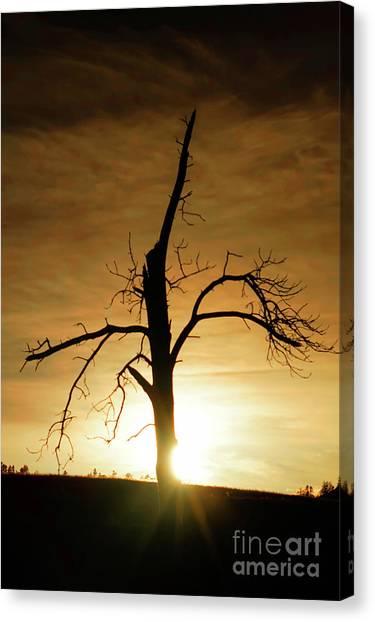 Tree Silhouette At Sundown Canvas Print