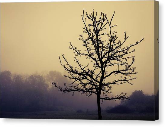 Foggy Canvas Print - Tree Silhouette On A Foggy Morn by Tom Mc Nemar