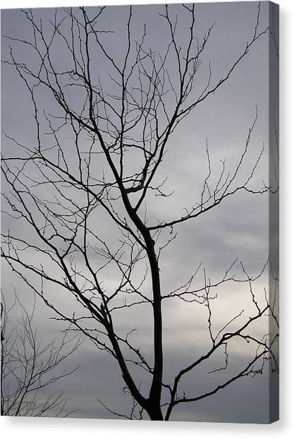 Tree Silhouette  Canvas Print by Richard Mitchell