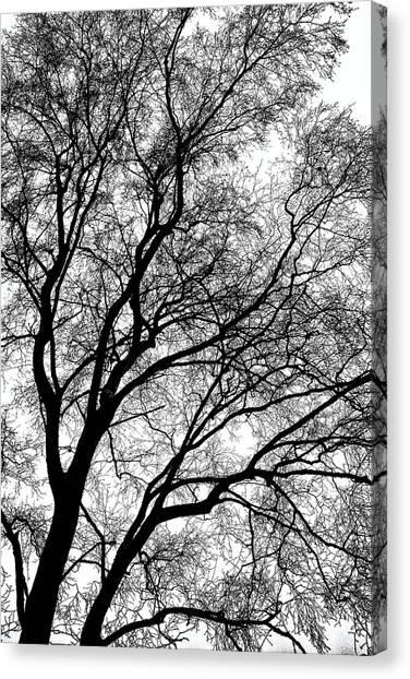 Tree Silhouette Series 1 Canvas Print