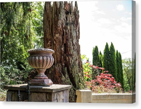 Tree Stump And Concrete Planter Canvas Print