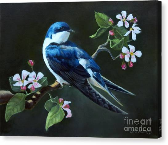 Swallow Canvas Print - Tree Swallow by Jeanne Newton Schoborg