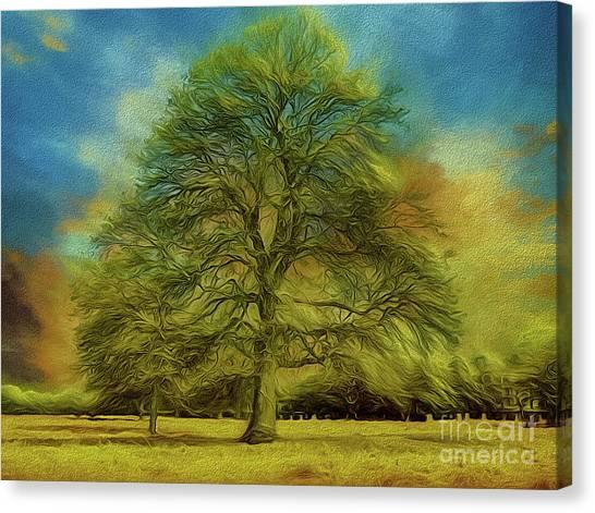 Tree Three Canvas Print