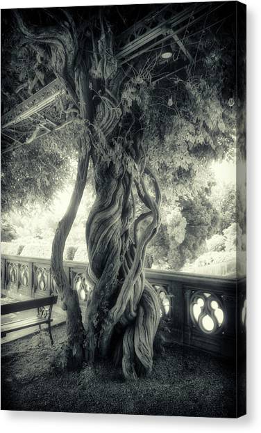 Tree Trunk Bw Series Y6693 Canvas Print