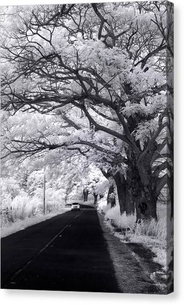 Country Roads Canvas Print - Tree Tube - Vert by Sean Davey