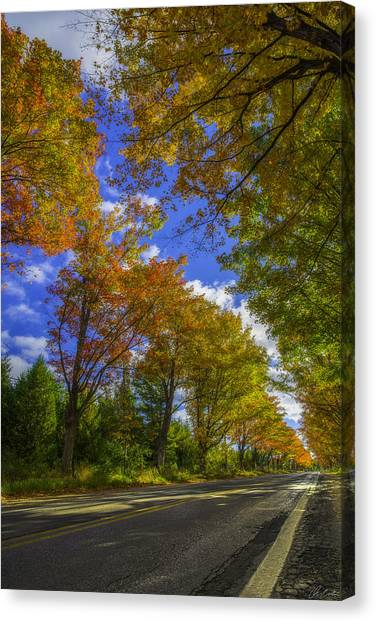 Canvas Print featuring the photograph Tree Tunnel On M22 by Owen Weber