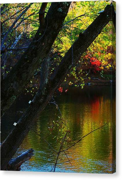 Tree View Canvas Print