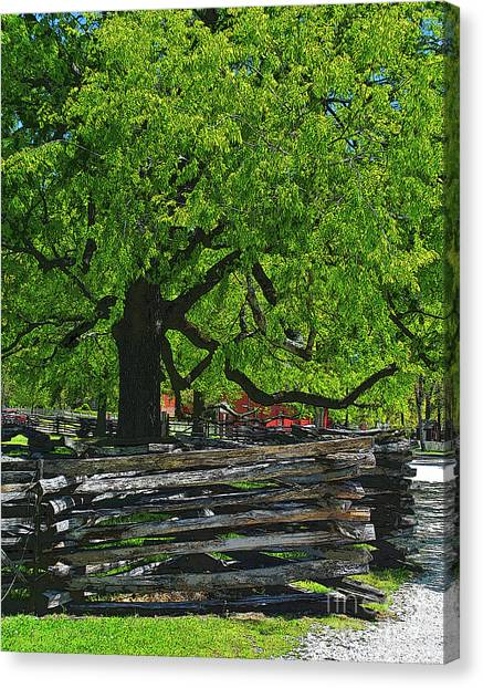 Tree With Colonial Fence Canvas Print
