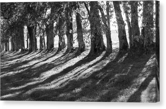 Treeline Canvas Print - Treeline by Amy Tyler