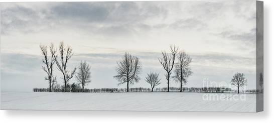 Treeline Canvas Print - Treeline In Snow, England by Amanda Elwell