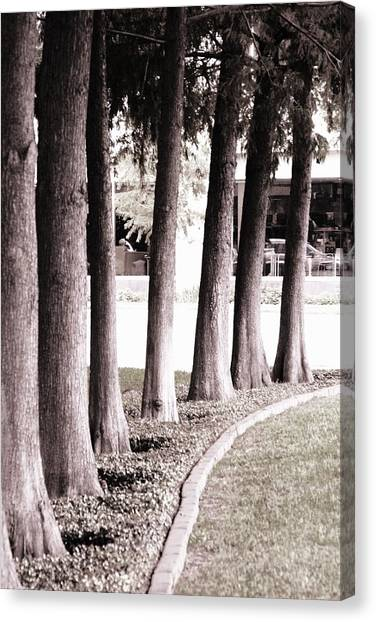 Trees 2 Canvas Print by Gracey Tran