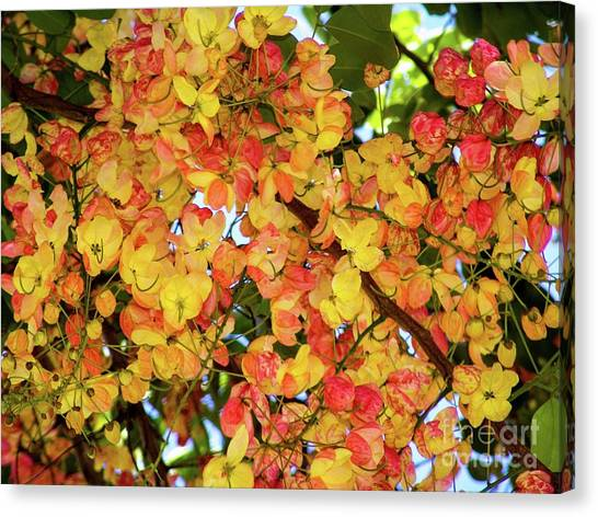 Trees And Flowers In Hawaii Canvas Print