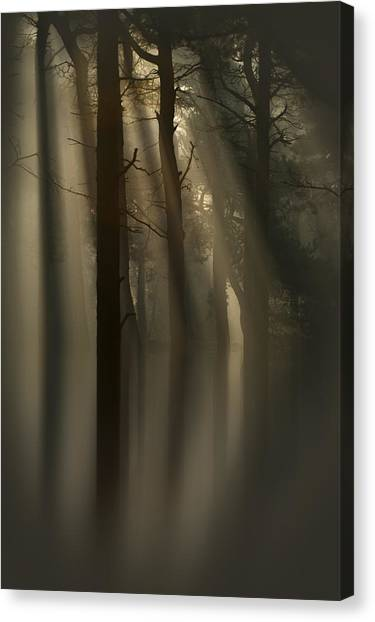 Trees And Light Canvas Print
