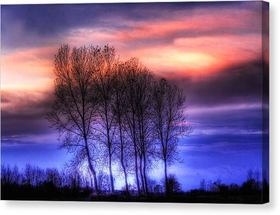 Trees And Twilight Canvas Print
