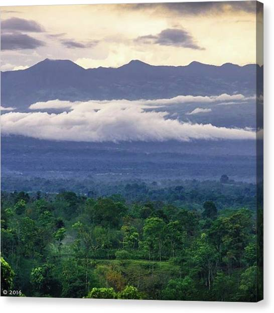 Rainforests Canvas Print - Trees Are Poems That The Earth Writes by Greatpics Exclusive