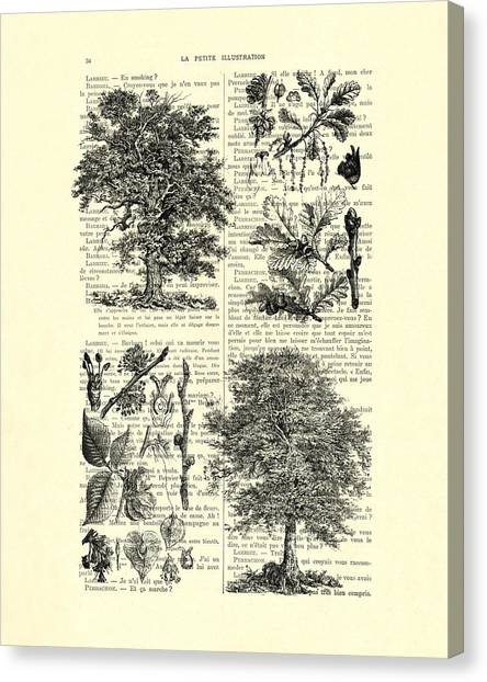 Media Canvas Print - Trees Black And White Illustration by Madame Memento