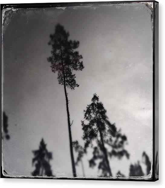 Largemouth Bass Canvas Print - Trees Black And White Wetplate by Matthias Hauser