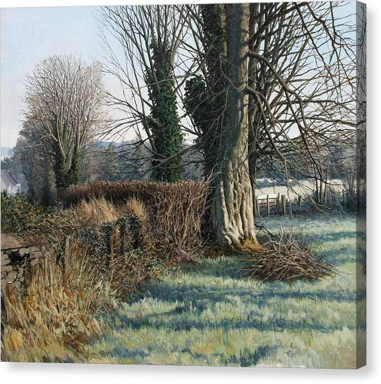 Trees Early Morning In Winter Canvas Print by Eugene Conway
