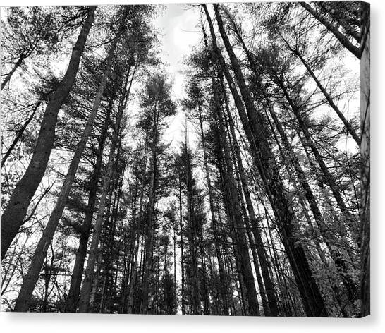 Trees Canvas Print by Eric Radclyffe