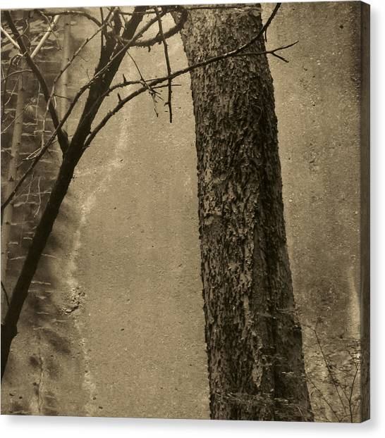 Trees Growing In Silo - Square 2015 Edition - Brown Canvas Print by Tony Grider