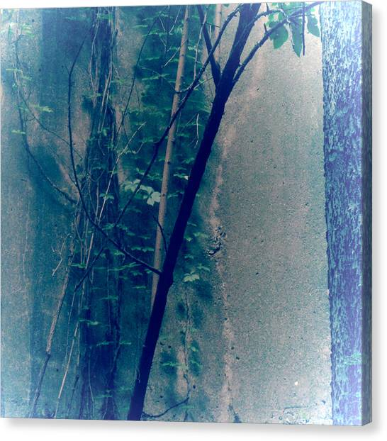 Trees Growing In Silo Abstract- Square 2015 Edition Canvas Print by Tony Grider