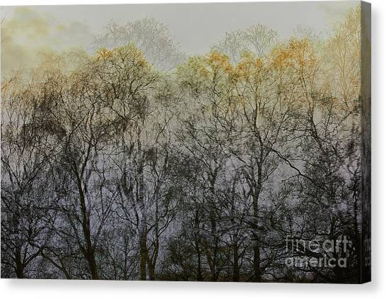 Canvas Print featuring the photograph Trees Illuminated By Faint Sunshine, Double Exposed Image by Nick Biemans
