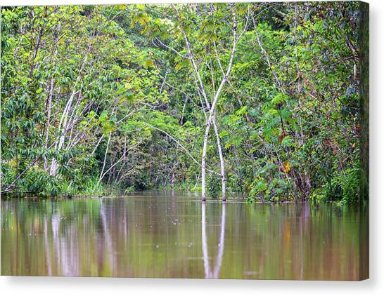 Amazon Rainforest Canvas Print - Trees In A Flooded Area by Jess Kraft