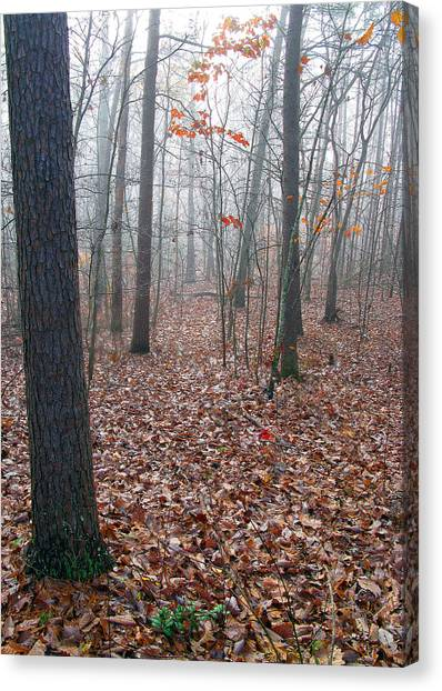 Trees In Foggy Fall Woods Canvas Print by Richard Singleton