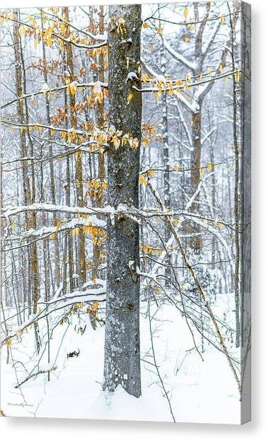 Trees In Snow Canvas Print